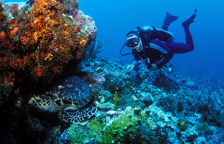 Diving Grenada